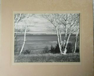 Old Vintage B/w Photograph The Birches Landscape By A Chase