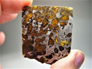 Museum Quality Crystals Brahin Pallasite Meteorite 16.  1 Gms