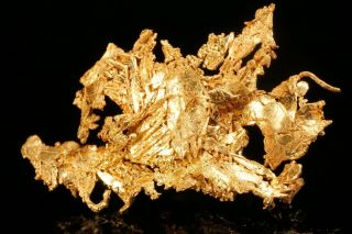 Extraordinary Native Gold Crystal Cluster Eagle