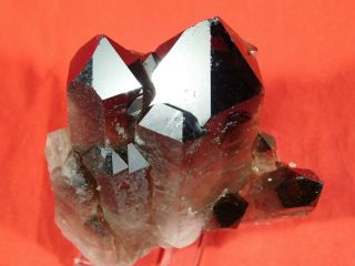 Seven Perfect Points On This Smoky Quartz Crystal Cluster From Brazil 328gr E