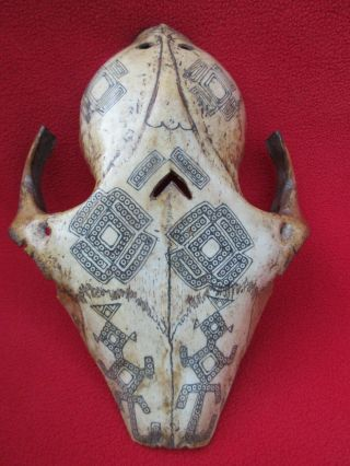 West Timor Enchanting Totemic Guardian Spirit Ceremonial Skull Mask Indonesia